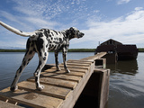 Dalmatian Dog Stands on Boardwalk Leading to Barge on the Panteleikha River Photographic Print by Chris Linder