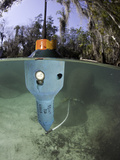 A Floating Transmitter That Sends a Signal to Track the Threatened Florida Manatee Photographic Print by David Fleetham