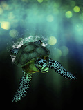 Green Sea Turtle Swimming in the Ocean Photographic Print by Victor Habbick