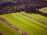 Making New Farm Land, Nenana, Alaska Photographic Print by Paul Andrew Lawrence