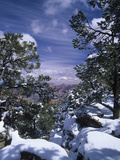 Snow Covered Pines Along the South Rim of the Grand Canyon, Grand Canyon National Park, Arizona Photographic Print by Adam Jones