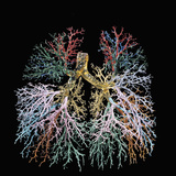 Resin Cast of the Human Lungs and Bronchial Tree Photographic Print by Ralph Hutchings