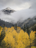 Aspens in their Autumn Finery Deep in the Uncompahgre River Gorge Near Ouray Photographic Print by Don Grall