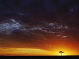 Umbrella Thorn Acacia Tree (Acacia Tortilis) Silhouetted at Sunrise, Masai Mara Game Reserve Photographic Print by Adam Jones