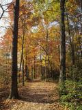 Pathway Through an Autumn Deciduous Forest, Red River Gorge Geological Area Lámina fotográfica por Adam Jones