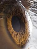 Close Up of Human Eye Photographic Print by Suren Manvelyan