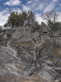 Trees and Brush in a Rocky Landscape Burned by a Wildfire on Palomar Mountain, San Diego County Photographic Print by Michael Johnson