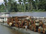 Barge Loaded with Rainforest Logs in the Amazon River, Para, Brazil Photographic Print by Jacques Janqoux