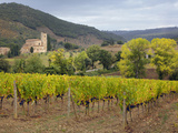 Vineyard and St. Antimo Abbey, Montalcino, Italy, Tuscany Photographic Print by Adam Jones
