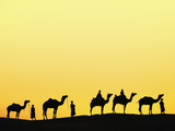Camels and Camel Drivers Silhouetted at Sunset, Thar Desert, Udaipur, India Photographic Print by Adam Jones