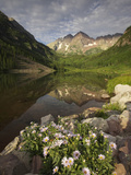 A Spring Bouquet of Aspen Daisies Decorates the Maroon Lake Shoreline Photographic Print by Don Grall