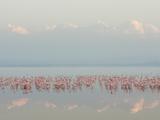 Lesser Flamingos, Phoenicopterus Minor, in Lake Nakuru, Kenya, Africa Fotografisk tryk af Arthur Morris