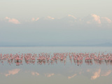 Lesser Flamingos, Phoenicopterus Minor, in Lake Nakuru, Kenya, Africa Photographic Print by Arthur Morris
