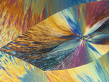 Vitamin C or Ascorbic Acid Crystals, Polarized LM Photographic Print by George Musil