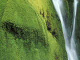 Detail of Green Falls, Baxter State Park, Maine Moss, Which Lack Roots Photographic Print by Chris Linder