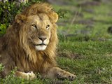 Male Lion (Panthera Leo), Masai Mara Game Reserve, Kenya, Africa Photographic Print by Mary Ann McDonald