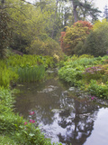 Large Pond with Candelabra Primula and Acers in the Spring, Minterne, Dorset Photographic Print by Phillip Smith