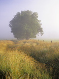 Single Tree in a Field on a Foggy Morning Photographic Print by Adam Jones