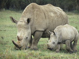 White Rhinoceros Mother and its Baby, Ceratotherium Simum, Nakuru, Kenya Photographic Print by Joe McDonald