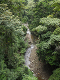 The Canopy and a Stream in the Rainforest of the Danum Valley Conservation Area, Sabah Photographic Print by Thomas Marent