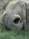 Close-Up of the Face of a Resting Southern Elephant Seal, Mirounga Leonina, South Georgia Photographic Print by Fritz Polking