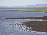 Wetlands of Malheur National Wildlife Refuge, Southeastern Oregon, USA Photographic Print by Marli Miller