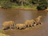 African Elephant (Loxodonta Africana) Herd Crossing River, Samburu Game Reserve, Kenya, Africa Photographic Print by Mary Ann McDonald