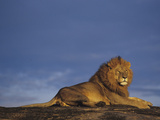 Male African Lion Watching over the Savanna at Dawn Front the Top of a Rock Outcrop Photographic Print by Joe McDonald