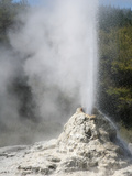Lady Knox Geyser, Wai-O-Tapu Geothermal Area, Taupo Volcanic Zone, New Zealand Photographic Print by Richard Roscoe