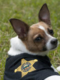Certified Police Drug Sniffer Dog Photographic Print by Louise Murray