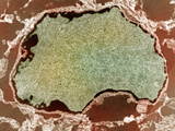 Human Papilloma Wart Viruses, Hpv, Packed in the Nucleus of Human Cell Tem X11,625 Photographic Print by George Musil