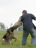 K9 Police Officer and Dog Handler with a Trained Aggression Dog Photographic Print by Louise Murray