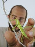 An Entomologist Catching a Predatory Bush Cricket (Saga Pedo) Photographic Print by Fabio Pupin