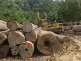 Timber at a Rainforest Logging Area Near the Danum Valley Conservation Area, Sabah Photographic Print by Thomas Marent