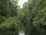 Rainforest River in Tanjung Puting National Park, Kalimantan, Borneo, Indonesia Photographic Print by Thomas Marent