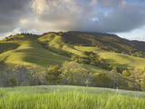 The Grassy and Oak Woodland Slopes of Mt. Diablo, Central California, USA Photographic Print by Patrick Smith