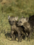 Spotted Hyena Juveniles at a Den Site, in the Masai Mara, Kenya Photographic Print by Joe McDonald