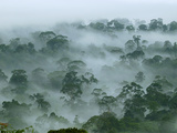 Canopy of the Lowland Rainforest at Dawn with Fog and Mist, Danum Valley Conservation Area, Sabah Photographic Print by Thomas Marent