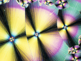 Cholesterol Crystals Viewed with Polarized Light, LM X160 Photographic Print by George Musil