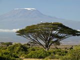 Acacia and Savanna Vegetation in Front of Mount Kilimanjaro, Kenya, Africa Fotografie-Druck von Joe McDonald
