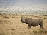 Black Rhinoceros (Diceros Bicornis), Masai Mara, Kenya Photographic Print by Mary Ann McDonald