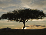 Twilight and a Silhouetted Acacia Tree, Masai Mara, Kenya Photographic Print by Mary Ann McDonald