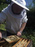 Bee Keeper Tending His Honey Bee (Apis Mellifera) Hives Photographic Print by Louise Murray