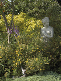Lydia Broom (Genista Lydia) and Mexican Orange Blossom (Choisya Ternata) Sundance Variety Photographic Print by Phillip Smith