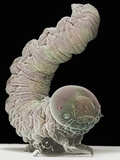 Sawfly Larvae, Hymenoptera, Sawfly Larva Belong to the Same Order of Insects as Ants, Wasps Photographic Print by David Phillips