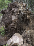 Falling Trees Aid the Downslope Movement of Bedrock in Forested Areas Photographic Print by Marli Miller