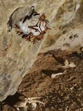Wasp Colony (Belonogaster Sausserei) at their Large Nest at the Entrance of a Cave, Socotra, Yemen Photographic Print by Fabio Pupin