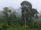 Lowland Rainforest at Dawn with Fog and Mist, Danum Valley Conservation Area, Sabah Photographic Print by Thomas Marent