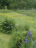 Wildflower Meadow with Iris's, Buttercups Photographic Print by Phillip Smith