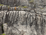 Stromatolites in Proterozoic Helena Formation, Glacier National Park, Montana, USA Photographic Print by Marli Miller